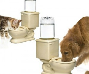 Toilet Water Bowl For Pets – It's unsanitary for your pet to drink out of your toilet, but for some reason they just can't seem to keep their noses out