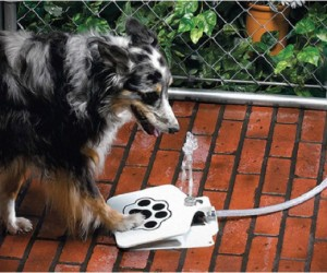 Dogs love drinking out of the hose so why not let them do it themselves.