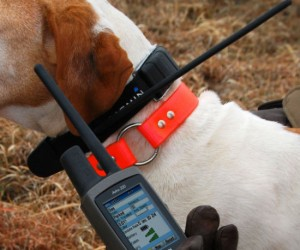 Now you will know exactly where your dog is at all times!