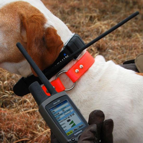 Dog Collar Camera Iphone