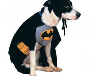 Doggy Superhero Costumes – If your dog is your hero then he deserves to be honored for it!
