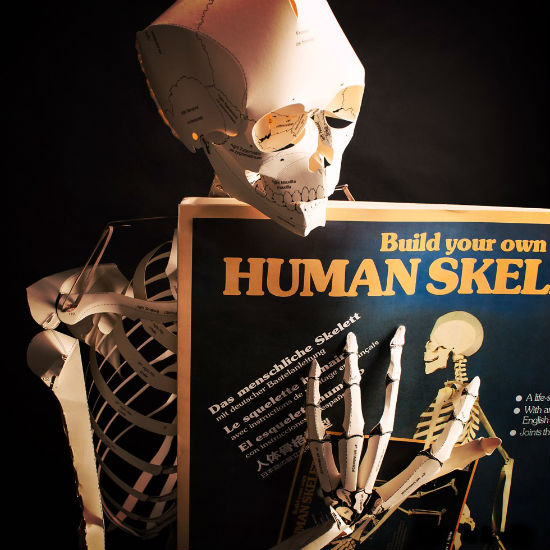 build your own human skeleton