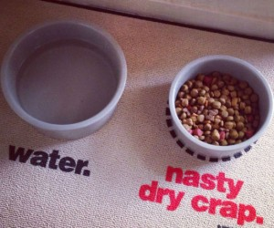 To our pets it may be delicious, but to us it really is just nasty dry crap. (Don't ask)