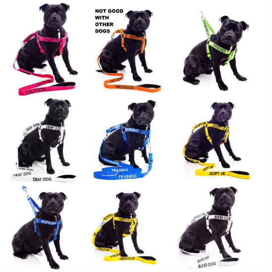 Color coded dog leash