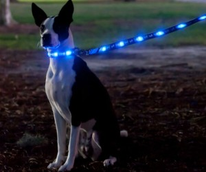 LED Light Up Dog Leash – Now you can take your dog for a walk any time of the day (or night)