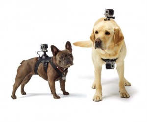 Get a dog's eye view of the world through your GoPro camera!