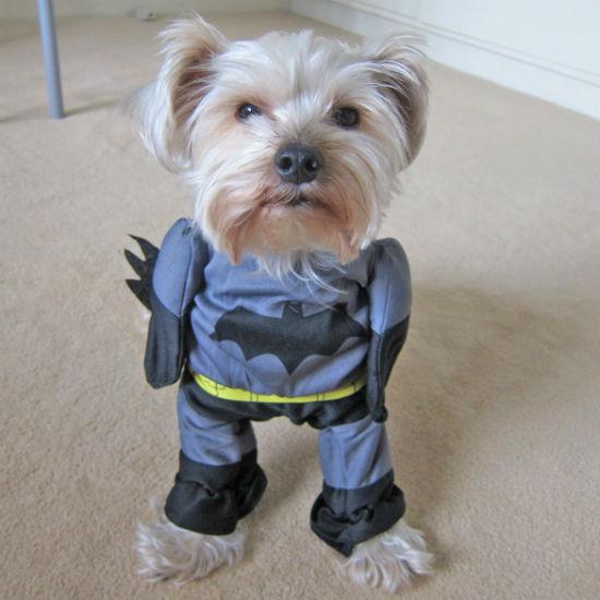 & Batman Dog Costume