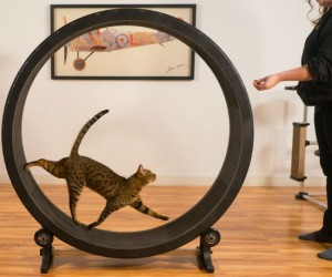 Exercise wheels aren't just for hamsters anymore!