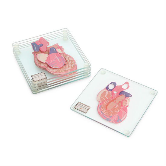 anatomical-heart-coaster