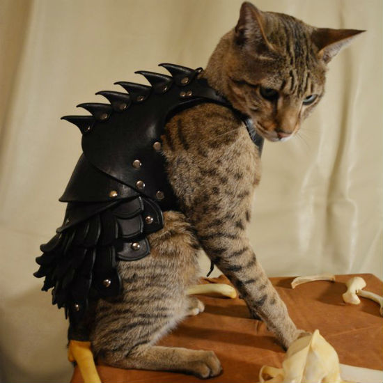 cat-battle-armor-550