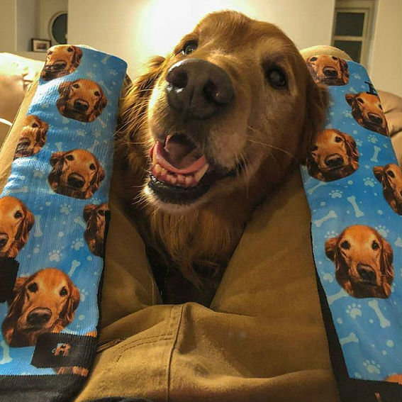 customized dog socks