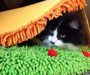 Cat Taco Bed –Your taco meow cat bed can be used folded closed, like a taco or flat, like a tostada. Therefore it's everything you need to spice up your