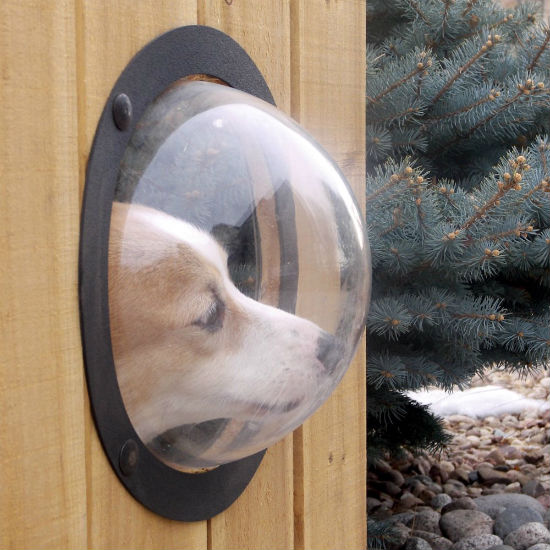 pet fence for dogs