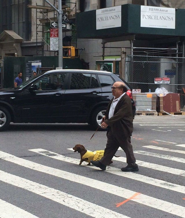 danny devito walking his dog in nyc