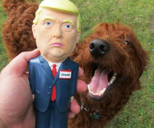 Make Dog Toys Great again with the Trump Squeaker toy! We have the best dog toys folks believe me.