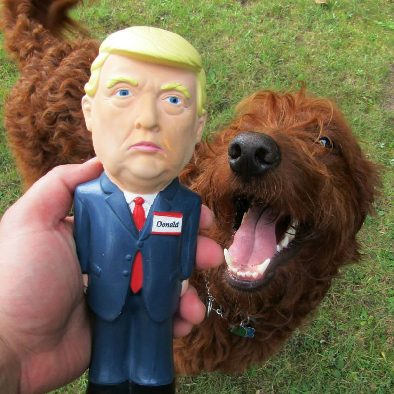 trump dog toy
