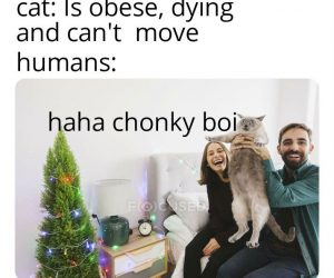 haha chonky boi cat meme