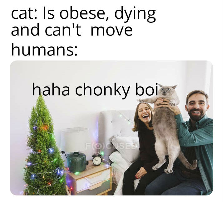 chonky boi cat meme