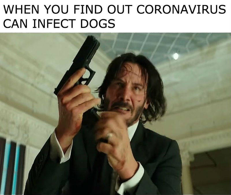 when you find out coronavirus can infect dogs john wick meme