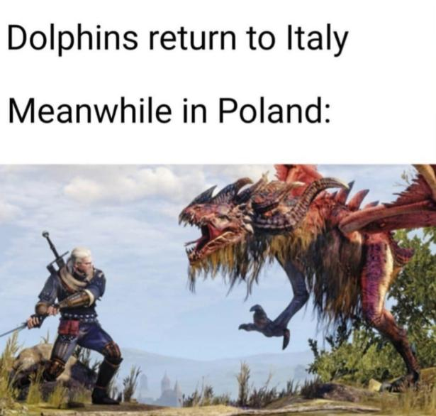 dolphins return to italy meanwhile in poland
