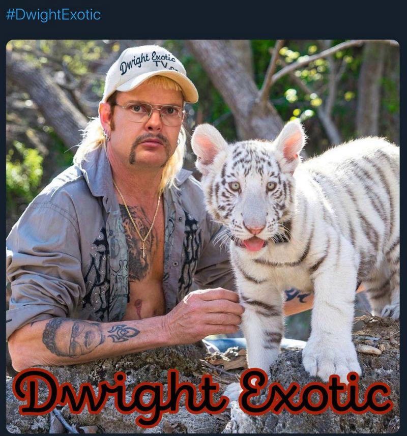 dwight exotic meme