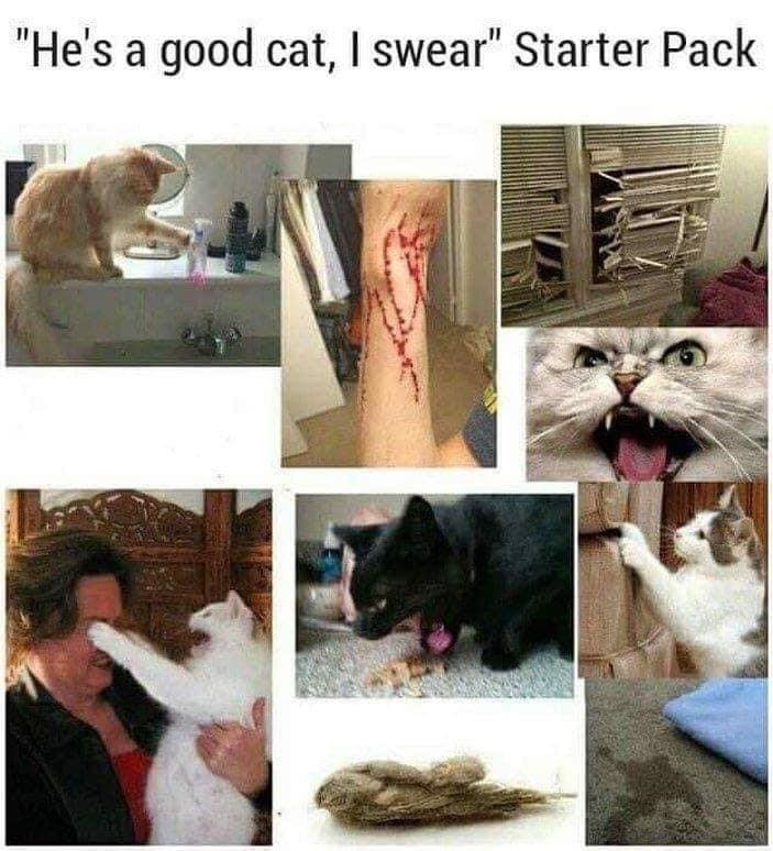 hes a good cat i swear starter pack