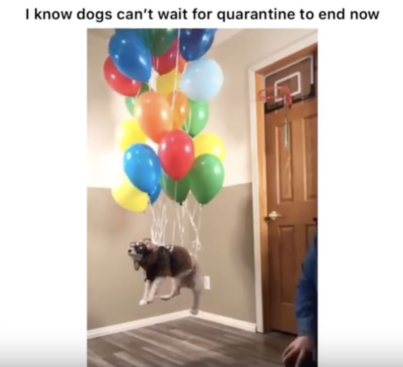 i know dogs can't wait for quarantine to end