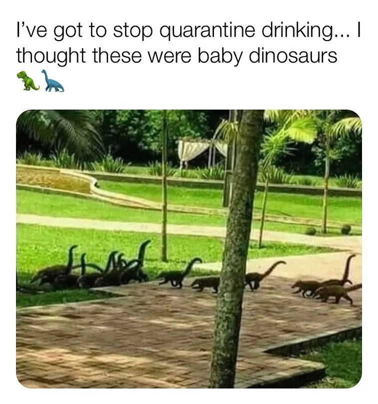 ive got to stop quarantine drinking meme