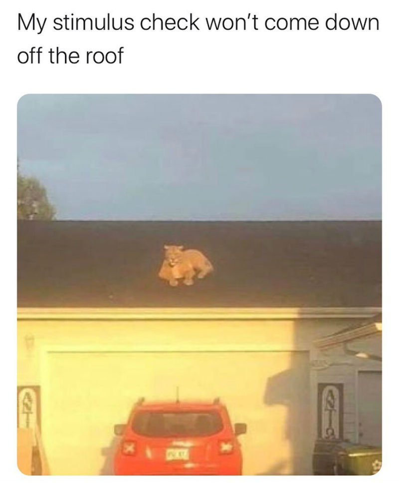 my stimulus check wont come down off the roof meme