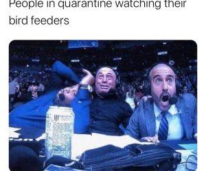 People In Quarantine Watching Their Bird Feeders – Meme