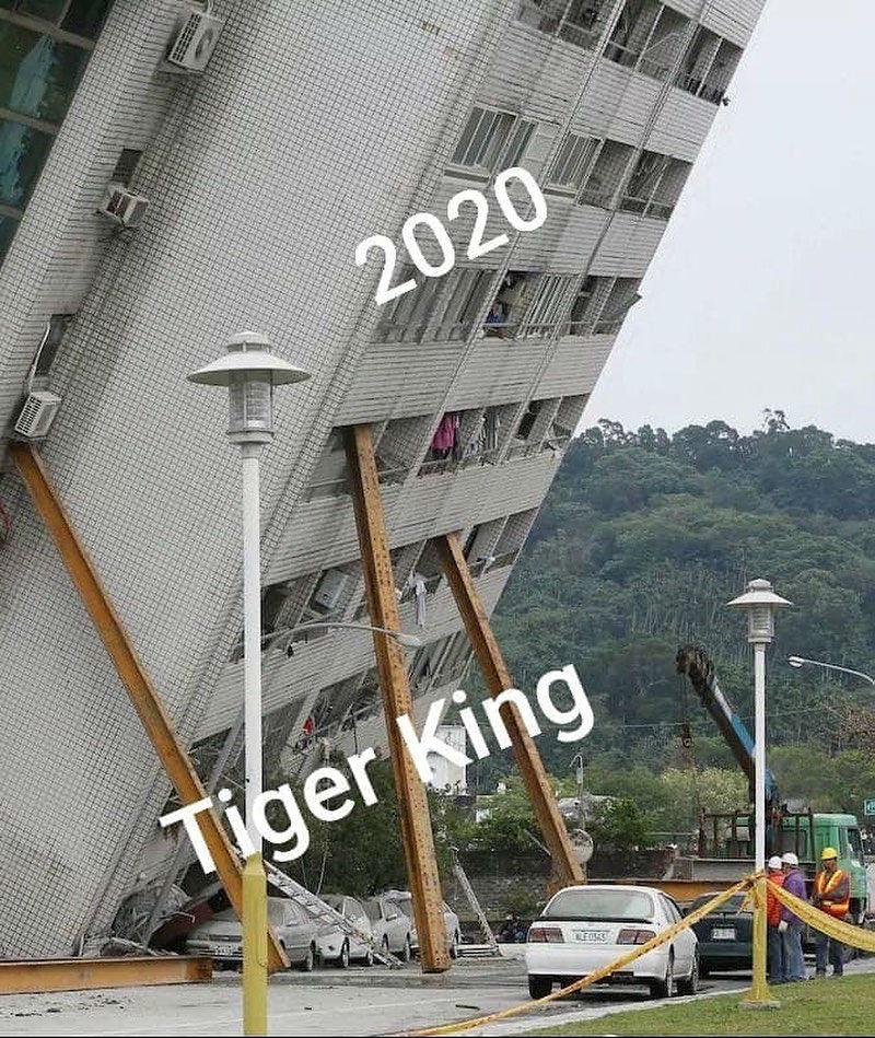tiger kind holding up 2020 meme