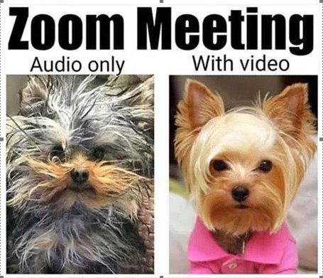 zoom meeeting audio vs video