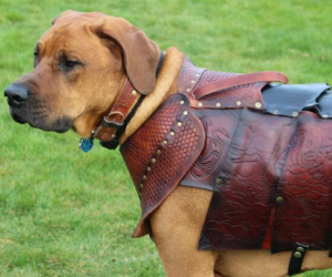 Leather Armor For Your Dog! – Just in case your dog ever has to ride into battle!