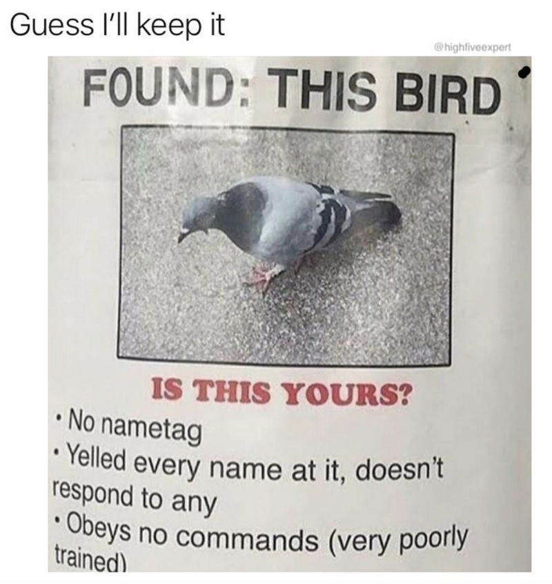 Found: This Bird - Poster Meme - Shut Up And Take My Money