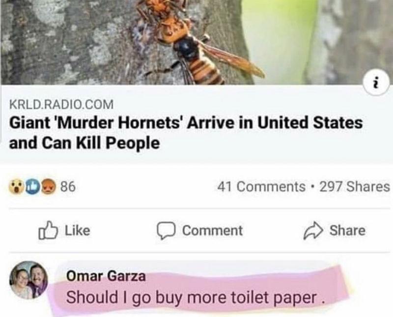 giant murder hornets memes