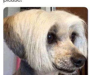 Karen Dog – Meme