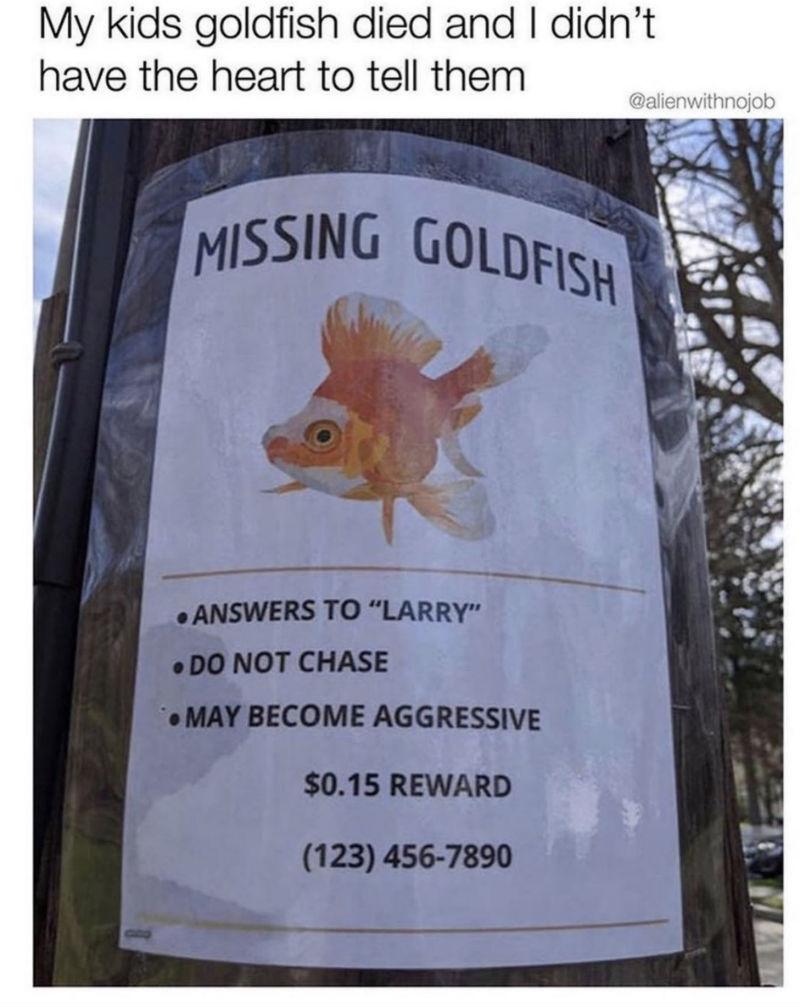 missing goldfish sign