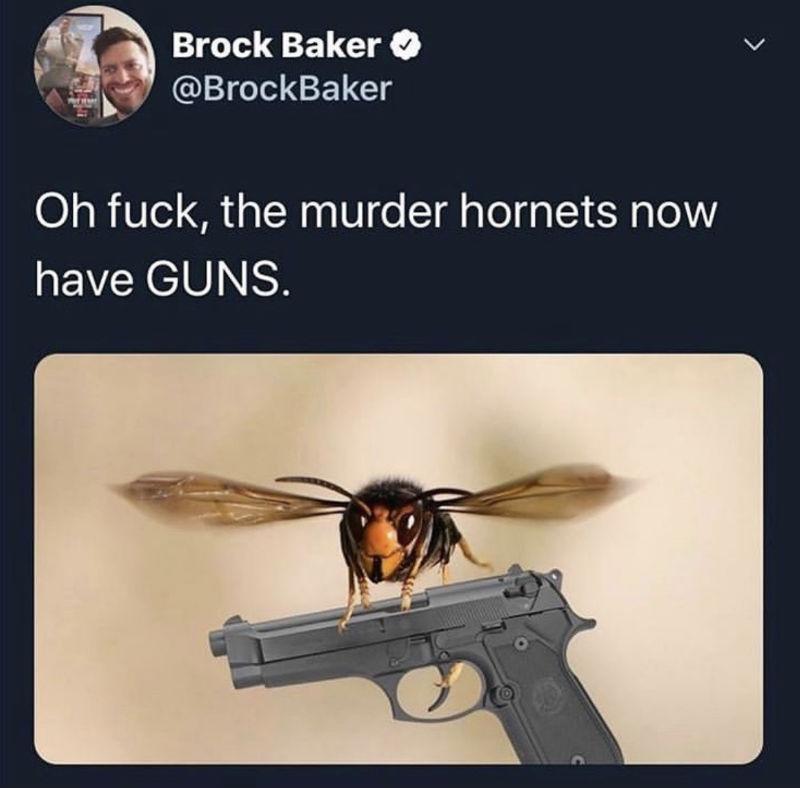murder hornets now have guns