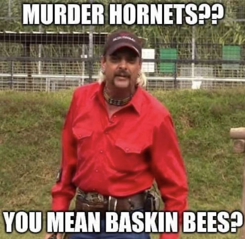 murder hornets you mean baskin bees meme