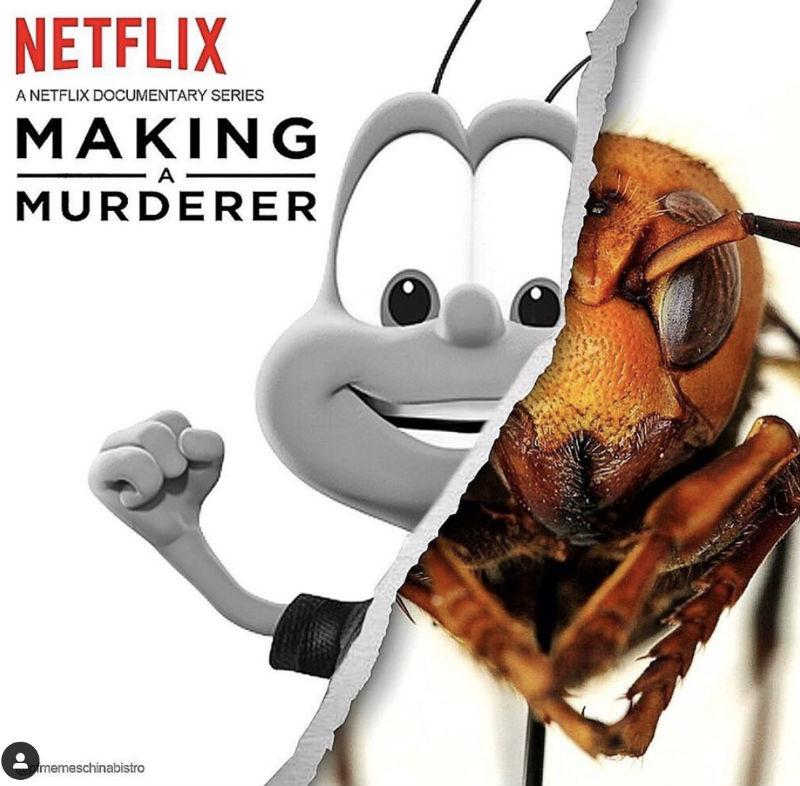 netflix making s murderer murder hornet