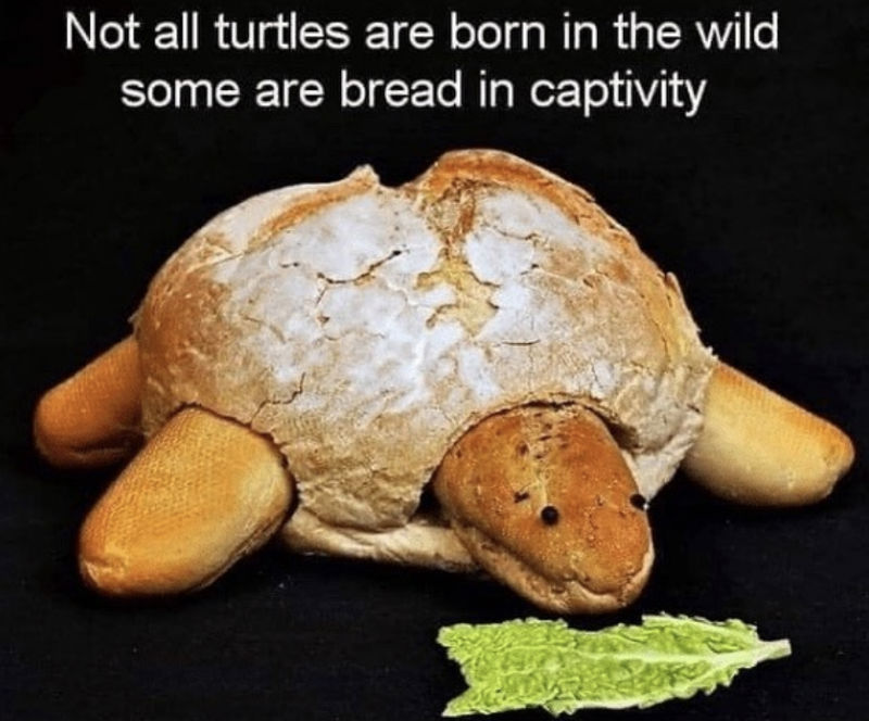 not all turtles are born in the wild