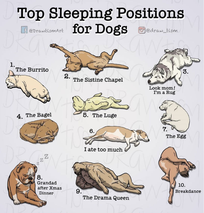 top sleeping positions for dogs