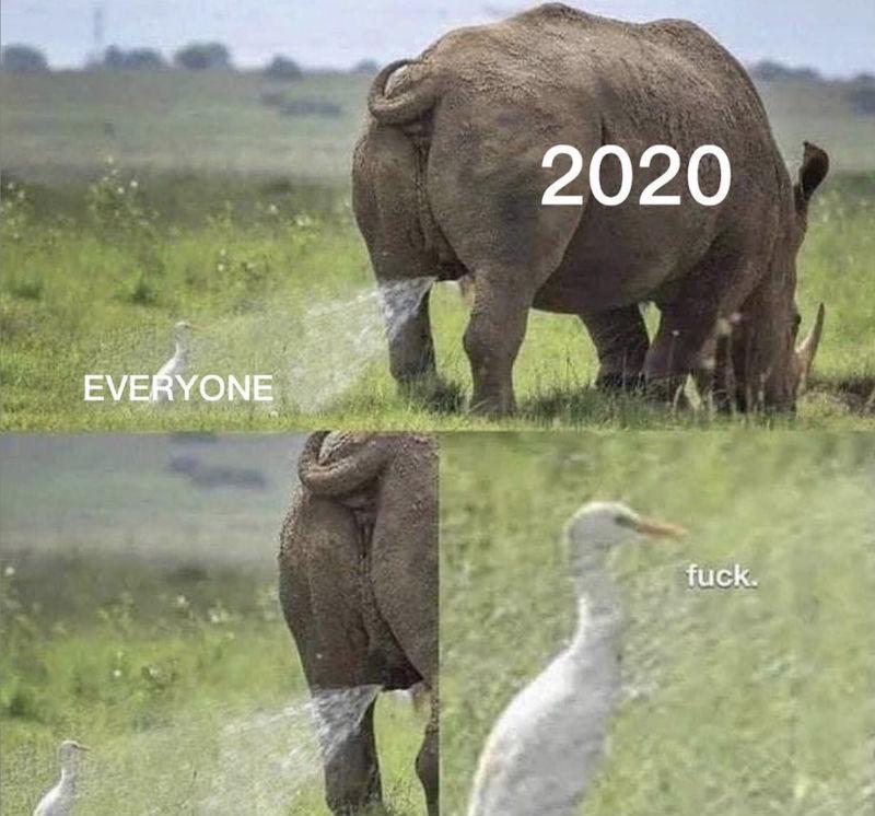 2020 everyone meme