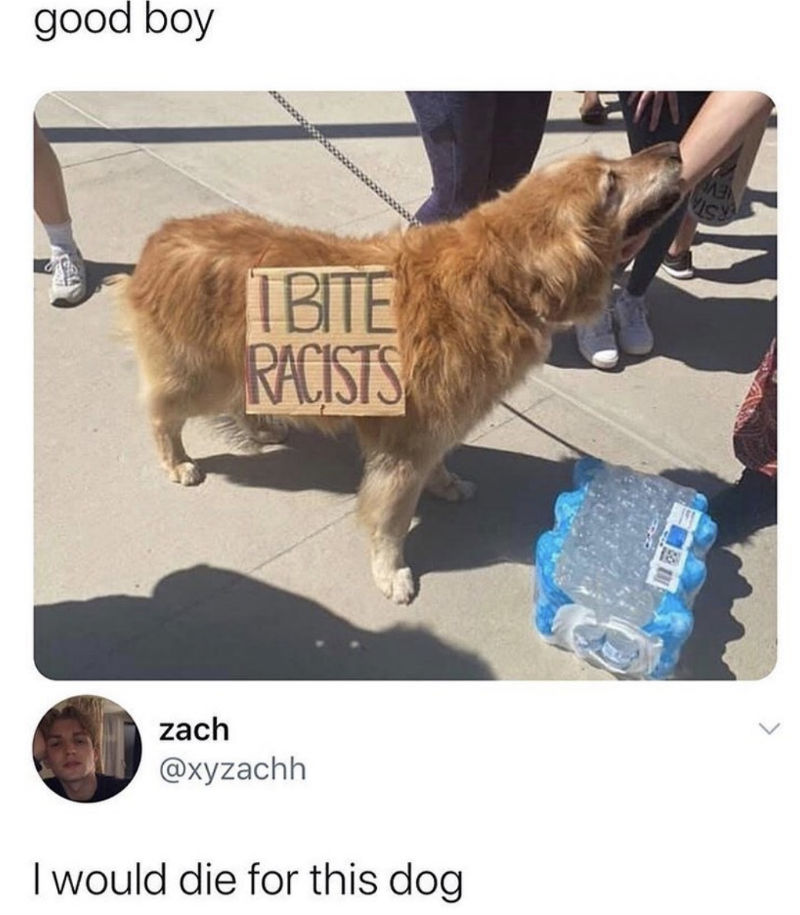 i bite racists dog