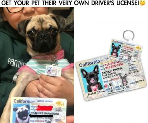California Driver License Custom Pet ID –Their driver license pet ID tag looks like the real thing! Features your pet's photo and info.
