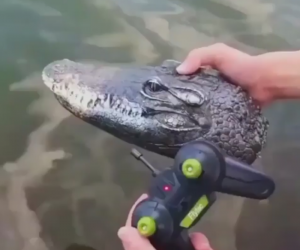 Remote Control Alligator Head Prank  – Time to pull some prank with this RC boat with the appearance of distinctive alligator head, realistic and vivid when swimming in the water!