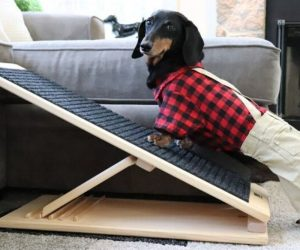 Foldable Dog Ramp – …THE Ramp for YOUR Pet!
