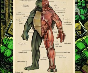 TMNT Anatomy Poster – This $15 poster is the perfect gift for lovers of animation, fantasy art, and biology!