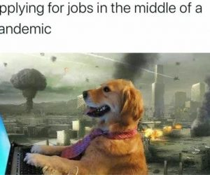 Applying For Jobs In The Middle Of A Pandemic – Meme