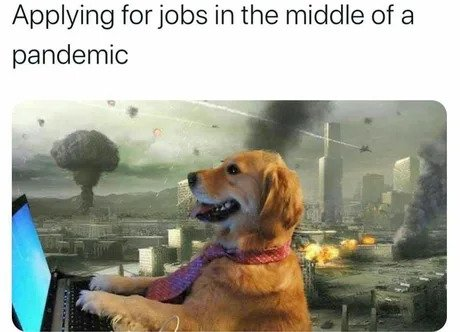 applying for jobs in the middle of a pandemic meme
